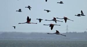Flamingo's, Hoeckelingsdam. Foto Bob van den Broek