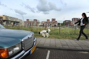 Kavel 13A aan de Daguerrestraat op IJburg, waar vanaf juli 2017 driehonderdtwintig containerwoningen staan.